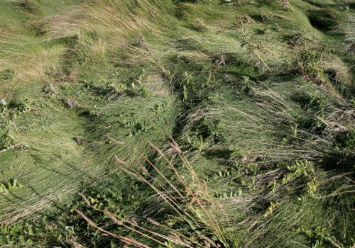 erba, vento, etretat, © luigi tremolada